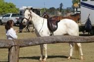 Fantastic Young Horse