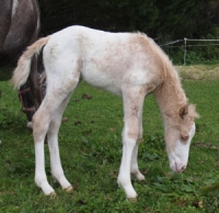 Colt by Mighty Luminous