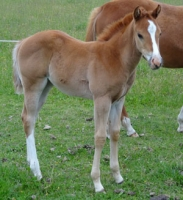 Filly by Mighty Luminous