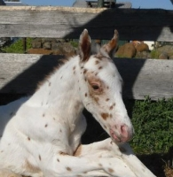 First foal by LV Lane Frost