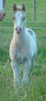 Lewisville colt