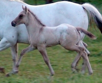 Lewisville filly