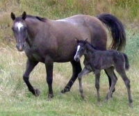 Filly by Enriched