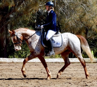 Small mare with massive movement!