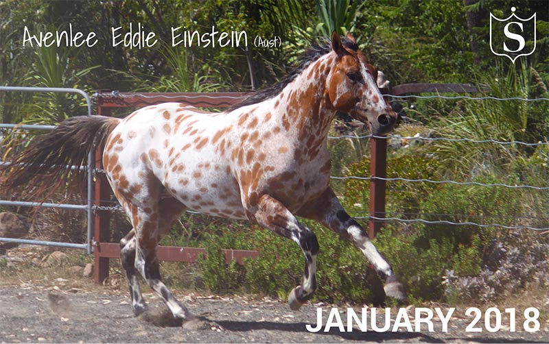 Mr January 2018 - Avenlee Eddie Einstein