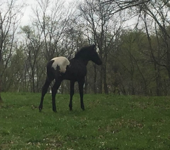 2019 Wapuzzan foal_10