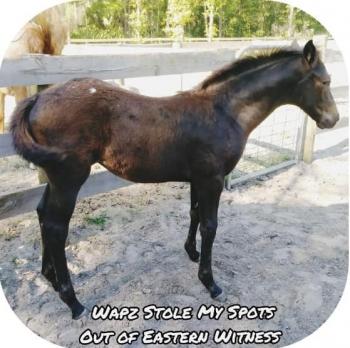 2019 Wapuzzan foal_7
